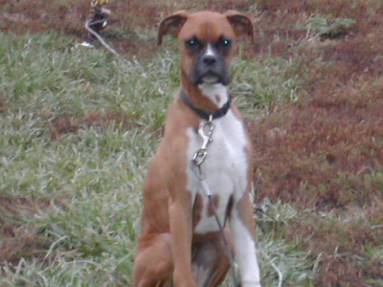 Pictures 187 Logan County Animal Rescue Lincoln Il